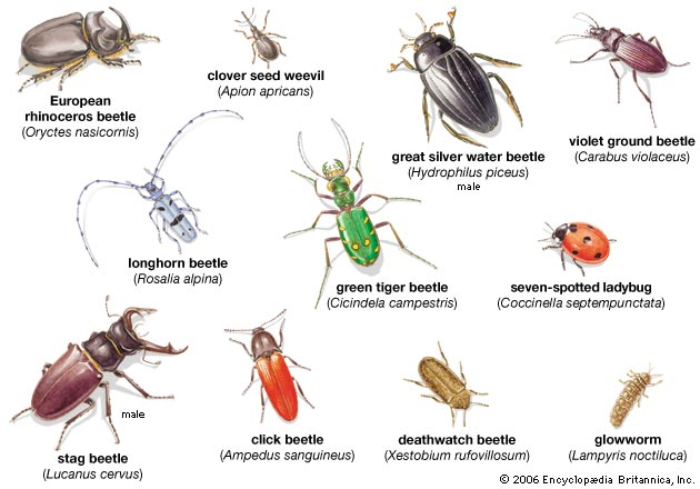 Types Of Salt Water Insects 38